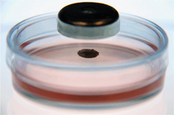 Magnetic levitation in a cell culture dish